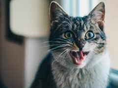 gato, del, кошек