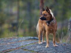 собака, природа, фон
