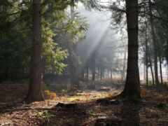 лес, фея, лесная