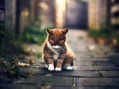 грустные, улице, котенок