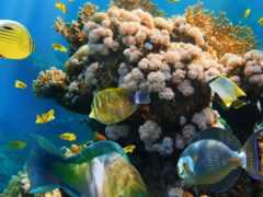 рыбки  в  коралловом рифе