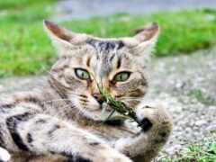 animal, grna, кот