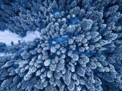 лес, prince, winter