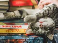 кот, книга, котейка