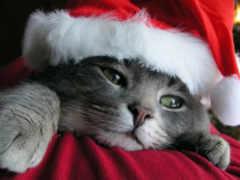 weihnachten, katzen, christmas