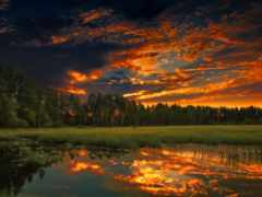 закат, вечер, лес
