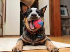 мяч, собака, toy