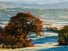 trees, осень, margin
