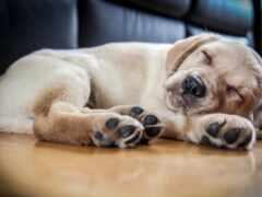 собака, small, ли