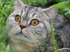 красивые, feline, кошки