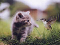 котенок, колибри, кот