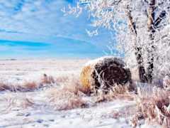 поле, winter, дерево