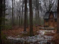 домик, лес, cabin