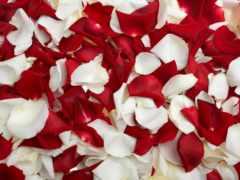 роз, лепестки, купить