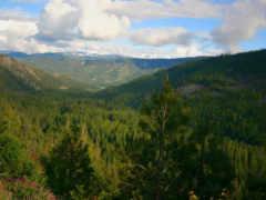лесные, необъятные, просторы