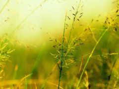 растительность, фон, экран