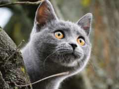 кот, котенок, story