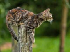 кот, взгляд, kitty