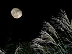 луна, japanese, осень