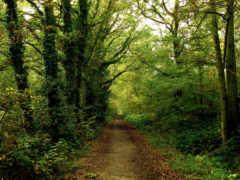 лес, дорога, тропинка