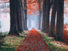 осень, permission