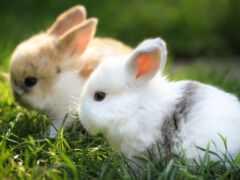 кролик, заяц, трава