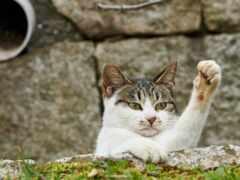 funny, кот, коты