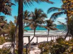 summer, пляж, palm