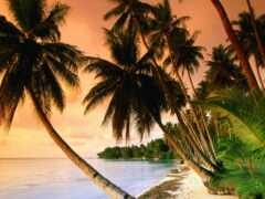 ocean, природа, palm
