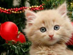 кот, новый год, котенок