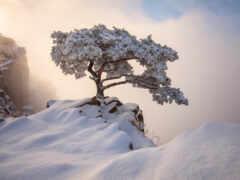 korea, winter, oir