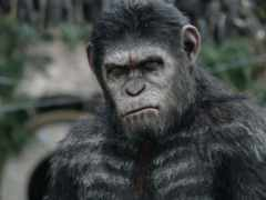 planet, apes, обезьяна