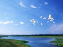 palomas, volando, fotos