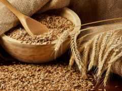 пшеница, серьги, seed