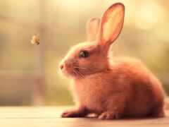 bunny, кролик, funart