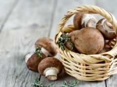 грибы, беременности, грибов