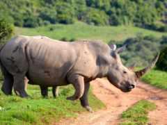 animal, природа, afrikan