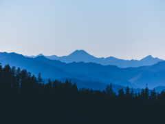 гора, лес, dark