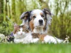 кот, animal, oir