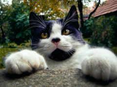 kedi, ciğere, mundar