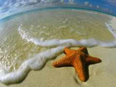 star, marine, livejournalmorskoi