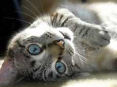 свет, кот, глазами