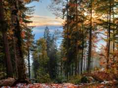 природа, trees, россии