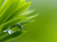 drop, water, makryi