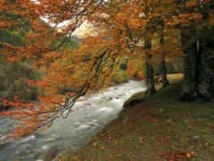 automne, осень, forêt