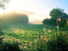 утро, деревне, летнее