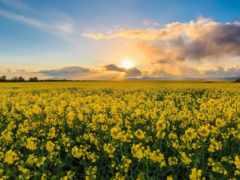поле, tags, ireland