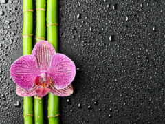 цветы, орхидея, бамбук