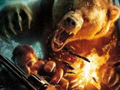 медведь, фото, dangerous
