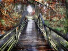 pont, rainy, fond